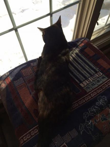 Holly watching her birds, that Mommy feeds!