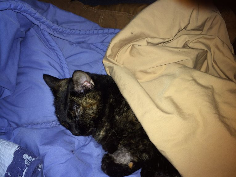 Holly sleeps peacefully her first night home!